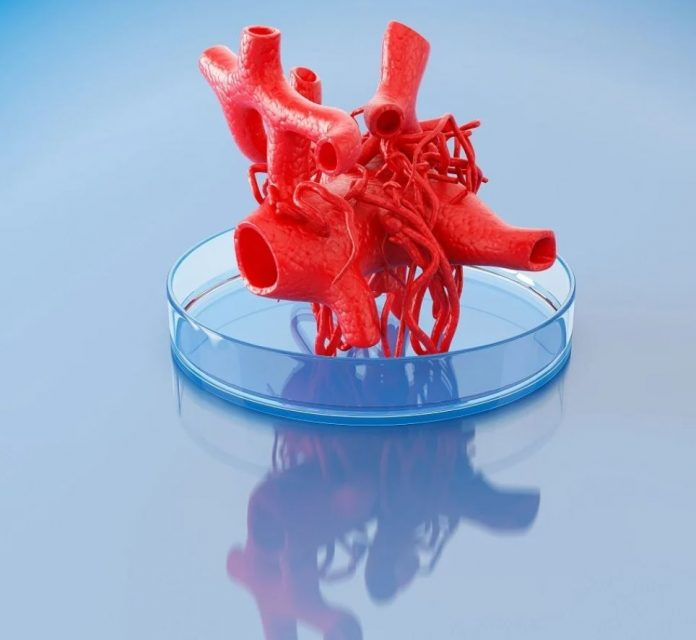 Biostampa 3D vasi sanguigni
